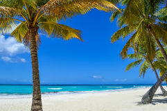 在异乎寻常的海滩的棕榈树在热带海岛 免版税图库摄影