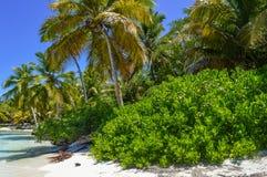 在异乎寻常的海滩的棕榈树在热带海岛 免版税库存图片