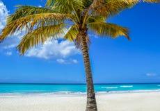在异乎寻常的海滩的棕榈树在热带海岛 库存照片