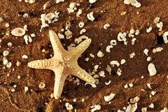 在异乎寻常的海滩的海星和海壳在温暖的日落 库存图片