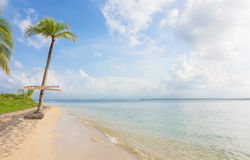 在异乎寻常的热带海滩的唯一棕榈树 免版税图库摄影