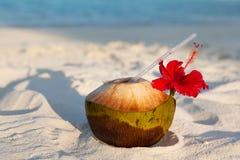 在异乎寻常的热带马尔代夫海滩的椰子饮料 免版税图库摄影