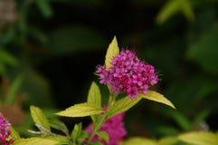 在引起轰动的颜色的美丽的小花 夹子采取看法视域外面,没有字符和天 库存照片