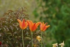 在引起轰动的颜色的花她代表自然,夏天 从远方观看 库存图片