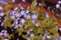 在引起轰动的颜色的花 正面图 免版税库存照片
