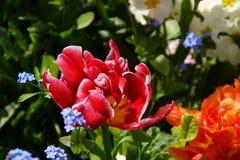 在引起轰动的颜色的花 库存图片
