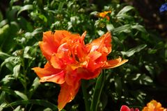 在引起轰动的颜色的花 免版税库存照片