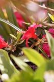 在引起轰动的颜色的花 免版税图库摄影