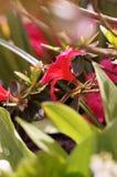 在引起轰动的颜色的花 免版税库存图片