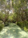 在弗雷泽岛澳大利亚的清楚的小河 免版税库存照片