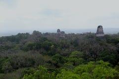 在弗洛勒斯附近的蒂卡尔国家公园在危地马拉,捷豹汽车寺庙是著名金字塔在蒂卡尔 库存图片
