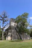 在弗洛勒斯附近的蒂卡尔国家公园在危地马拉,捷豹汽车寺庙是著名金字塔在蒂卡尔 免版税库存照片