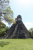 在弗洛勒斯附近的蒂卡尔国家公园在危地马拉,捷豹汽车寺庙是著名金字塔在蒂卡尔 图库摄影