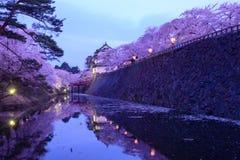 在弘前公园的樱花 免版税图库摄影