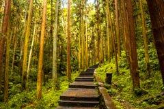 在张家界国民森林公园的路 库存照片
