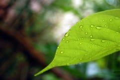 在弯曲的绿色叶子的泪花 库存照片
