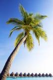 在弯的马尔代夫海洋棕榈树水之上 免版税库存照片