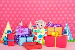 在当前箱子的小猫有生日聚会的提出和帽子 图库摄影