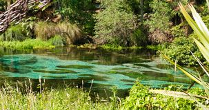 在当地布什的平静的小河 图库摄影