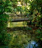 在当地布什的平静的小河 库存照片