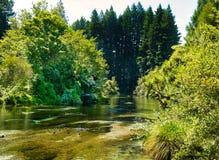 在当地布什的平静的小河 免版税库存照片