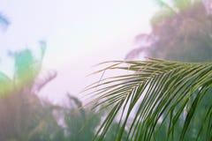在彩虹天空背景的棕榈树叶子 在白色云彩的棕榈叶 库存照片