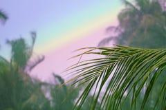 在彩虹天空背景的棕榈树叶子 椰子树树庭院 免版税图库摄影
