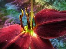 在彩虹漩涡前面的红色黄花菜 库存照片
