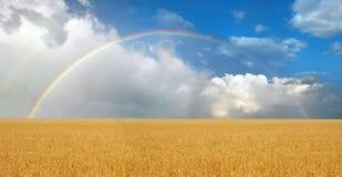 在彩虹wheatfield 库存照片