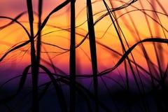 在彭萨科拉海滩的海燕麦 免版税图库摄影