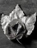 在影子的秋天背景黑暗的叶子 免版税图库摄影