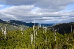在影子tarkine塔斯马尼亚岛的云彩森林 免版税库存照片