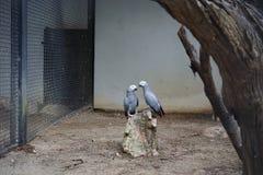 在徒步旅行队世界的两只鸟 库存照片