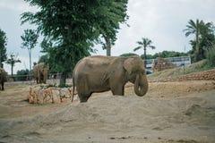 在徒步旅行队动物园法萨诺apulia意大利的大象 免版税库存图片
