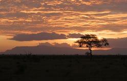 在徒步旅行队日落的非洲人 库存图片
