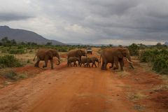 在徒步旅行队的一个大象家庭 免版税库存照片
