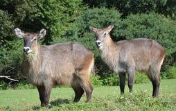 在徒步旅行队的动物 免版税库存图片