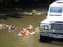 在徒步旅行队的河马在巴厘岛 免版税库存照片