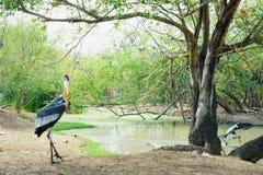 在徒步旅行队的鸟 免版税库存照片