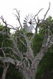 在得克萨斯采取的风车图象,当在驱动时 免版税库存照片