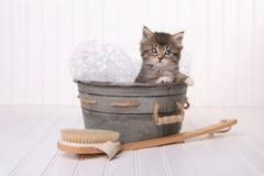在得到的洗衣盆的逗人喜爱的小猫修饰由泡末浴 库存图片