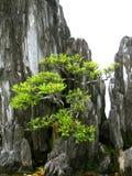 在微型山的盆景 库存图片