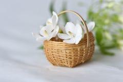 在微小的竹篮子的白花 免版税库存图片