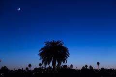 在微明的新月形月亮和棕榈树 图库摄影
