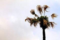 在微明的棕榈风 免版税库存照片