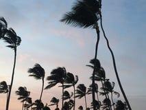 在微风的棕榈树 免版税库存图片