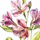 在德国锥脚形酒杯花开花的水彩的例证 与花的花卉卡片 植物的例证 皇族释放例证