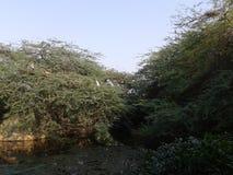 在德里,印度中间的绿叶 免版税图库摄影