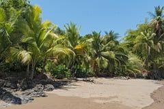 在德雷克海湾的美丽的海滩在太平洋在哥斯达黎加 库存图片