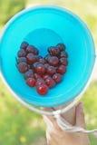 在心形的桶的莓果 库存图片